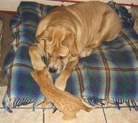 KAPS dog after treatment