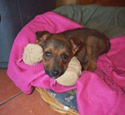 Pet adoptions from Karoo Animal Protection Society (KAPS)