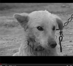 KAPS video animals in need